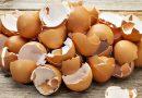 Yumurta kabuklarının 5 farklı kullanım alanı