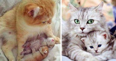 Evde Yalnız Başına Kalabilen 6 Kedi Cinsi